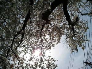 2012-04-10 13.03.03.jpg